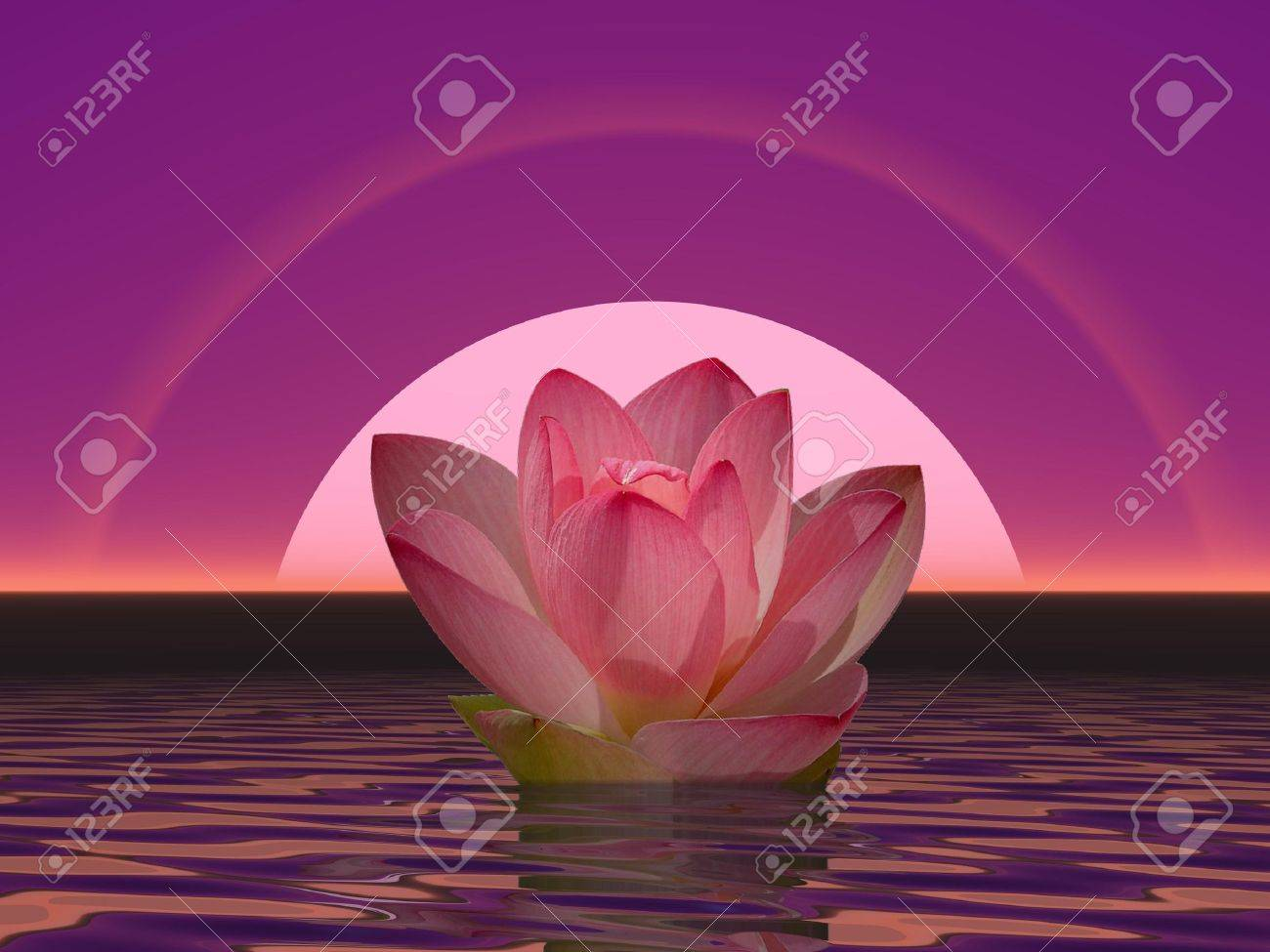 Pink lily flower on water in front of moon or sun with halos Stock Photo - 15385002