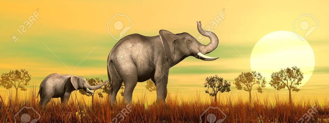 Baby elephant holding mum's queue in the savannah by sunset Stock Photo - 16801289