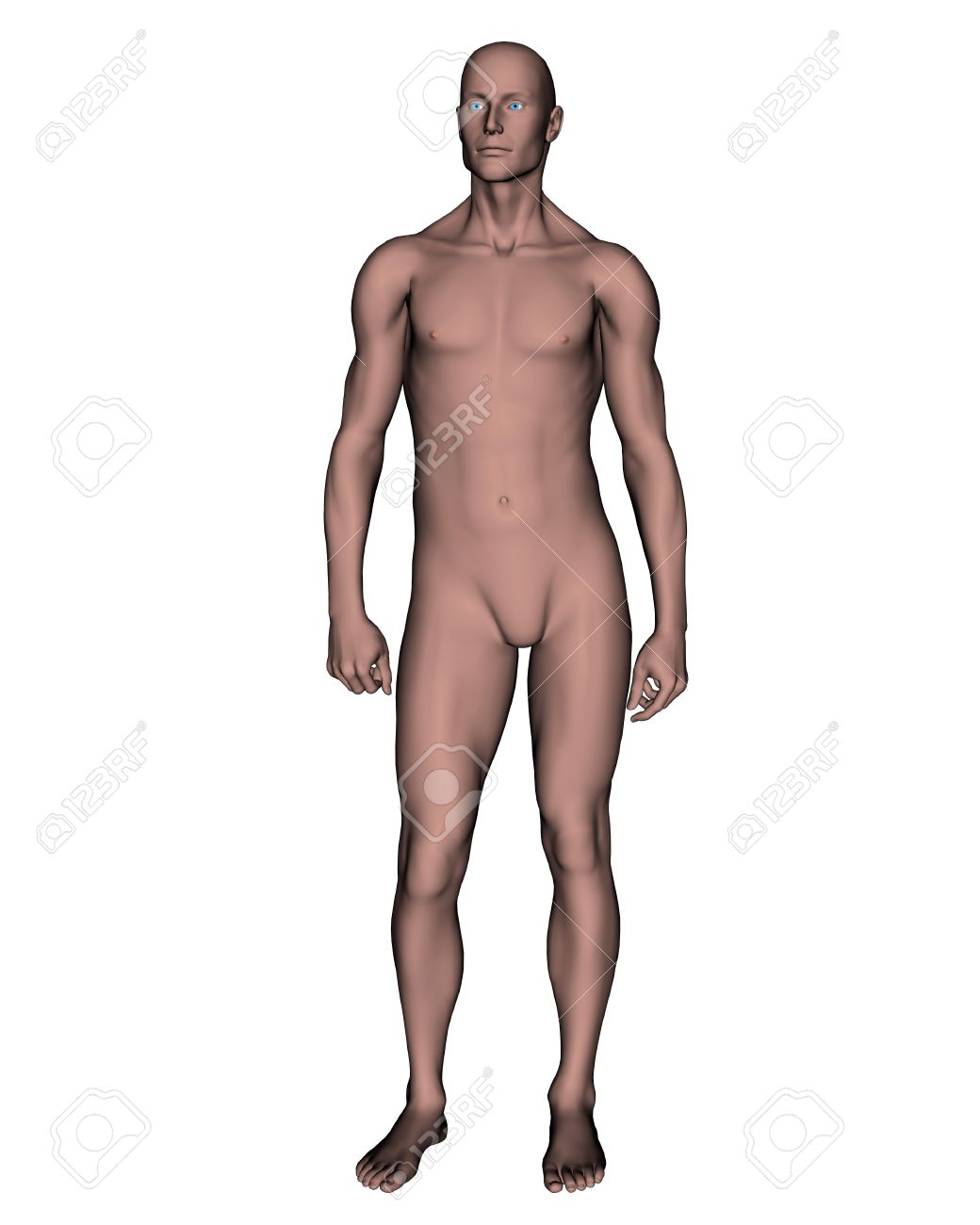 Standing naked male
