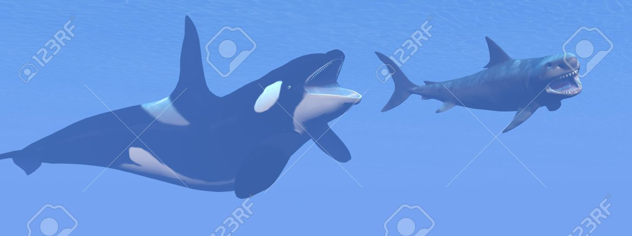 Killer Whale Attacking Small Megalodon Shark 3d Render Stock Photo Picture And Royalty Free Image Image 30751132
