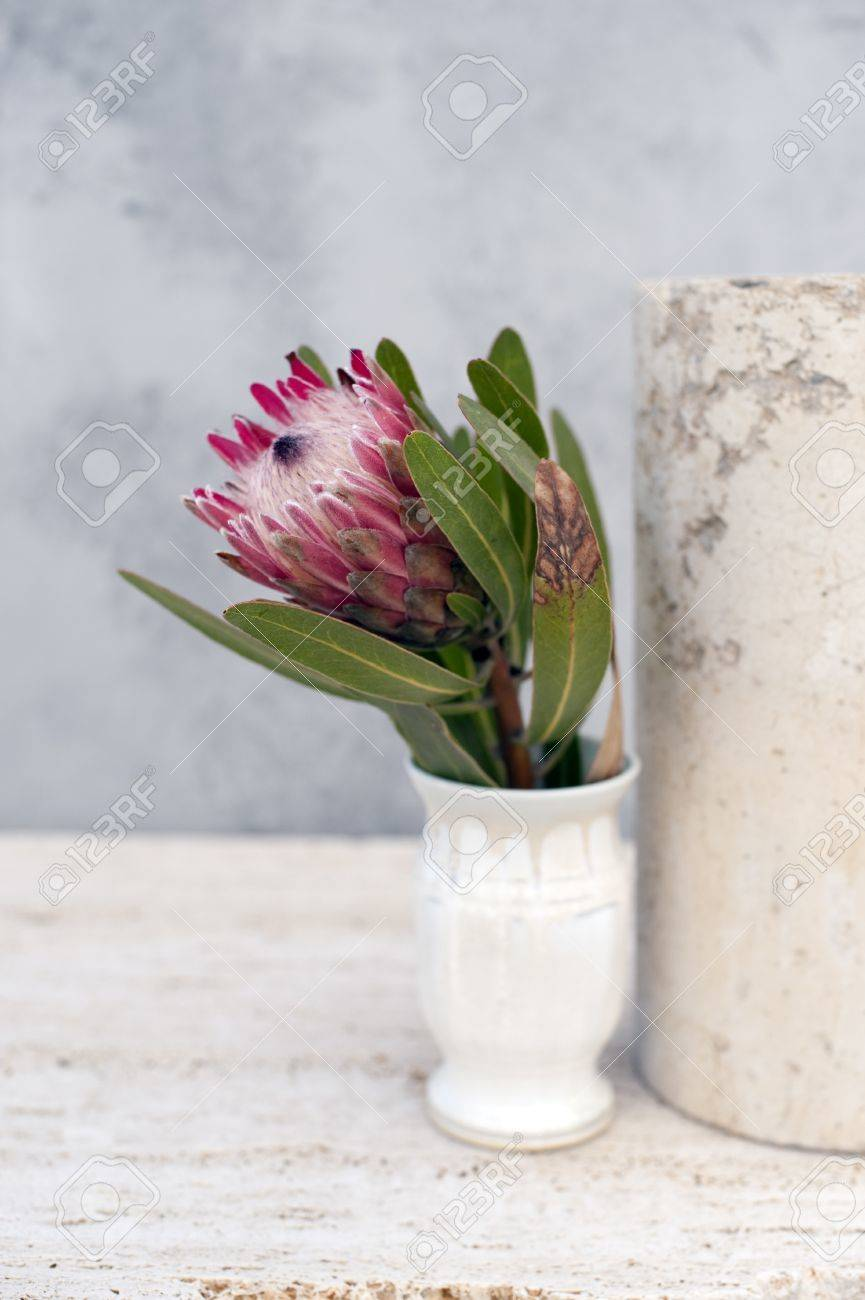 Still life photograph of a Protea flower in the studio. - 8216477