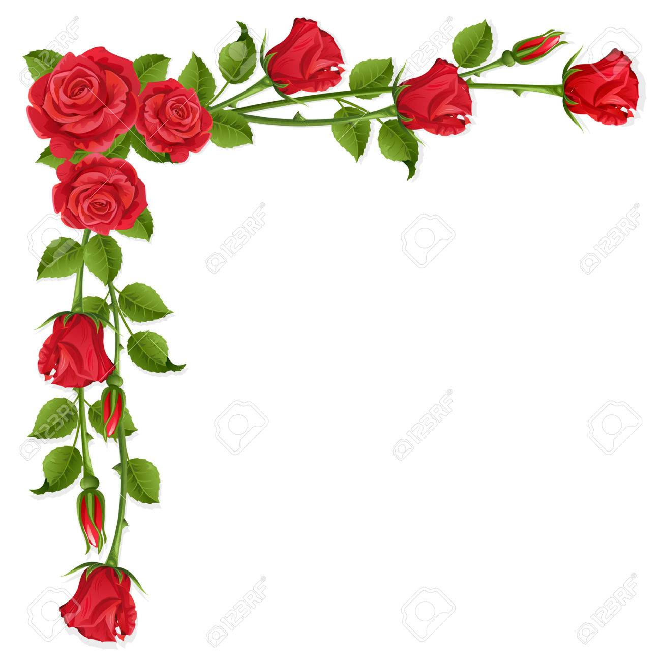 White background with red roses Stock Vector - 6243673