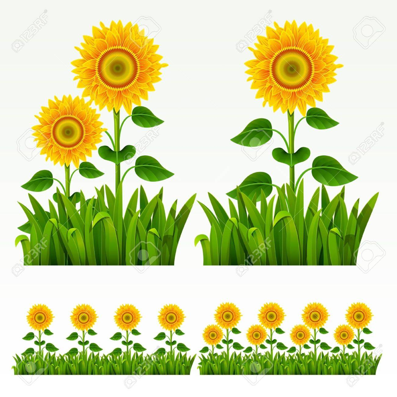 Grass green border with sunflowers. - 9692049