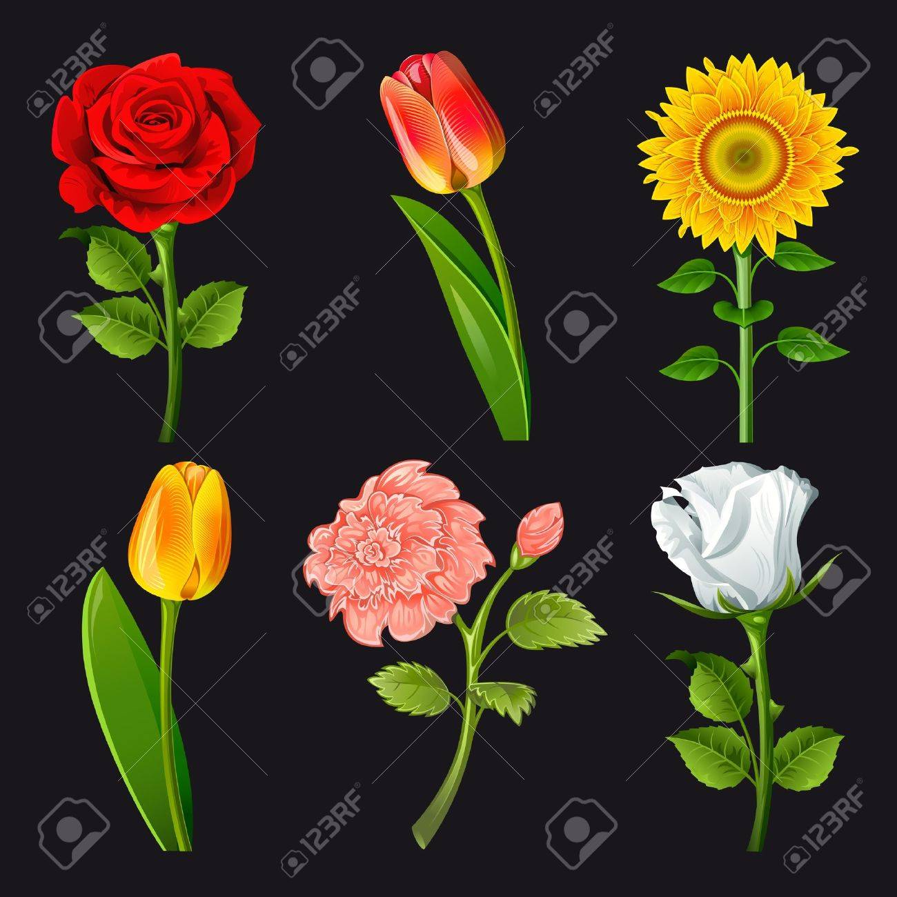 collection of flowers of different colors royalty free cliparts, Natural flower