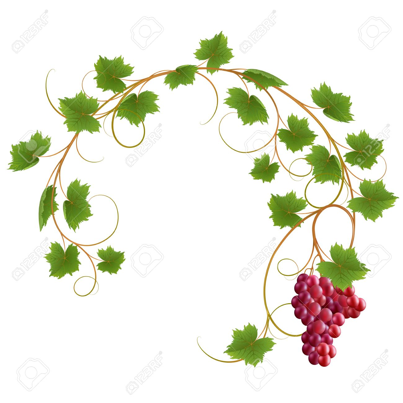 Red vine on a white background Stock Vector - 12182158