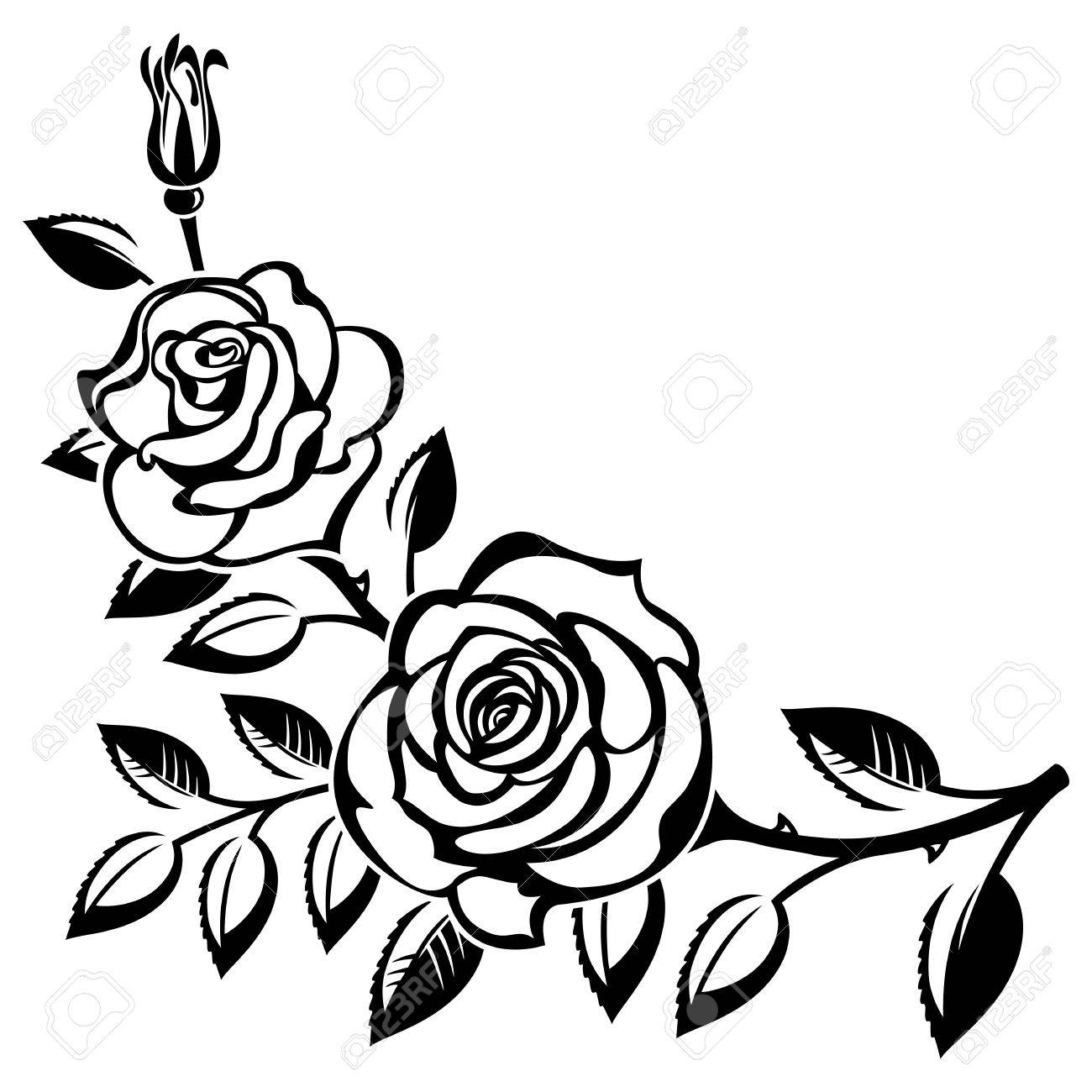 Branch of roses on a white background - 38013594