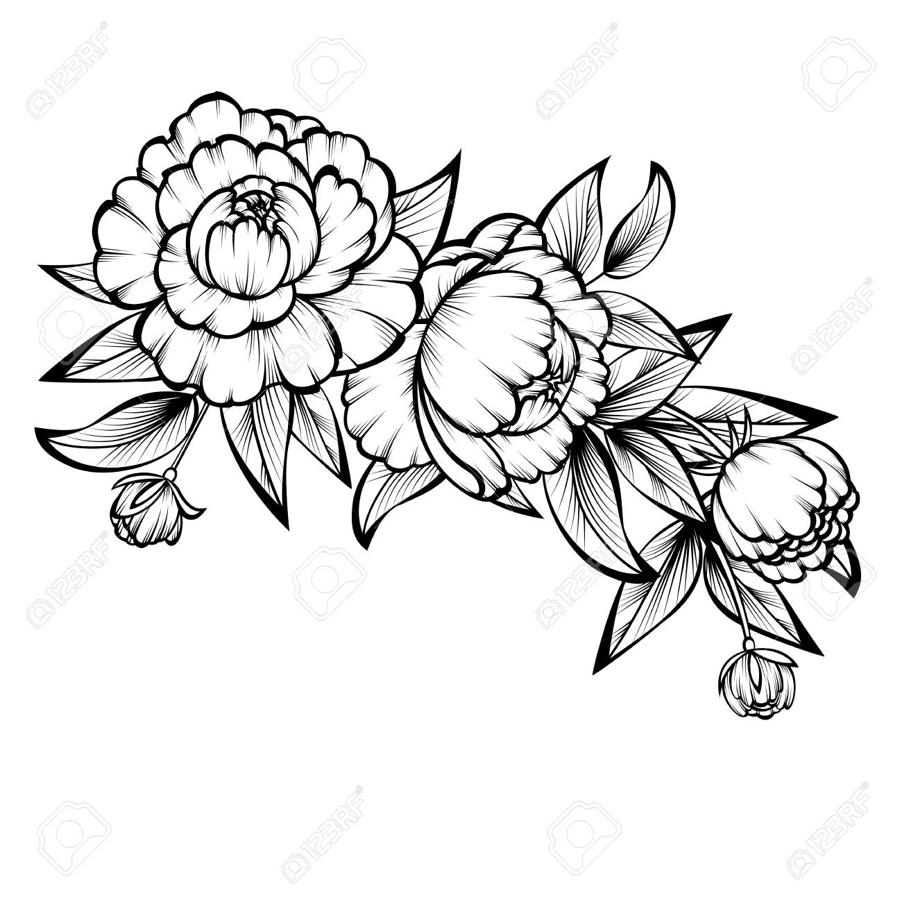 Branch of roses on a white background; - 120319400