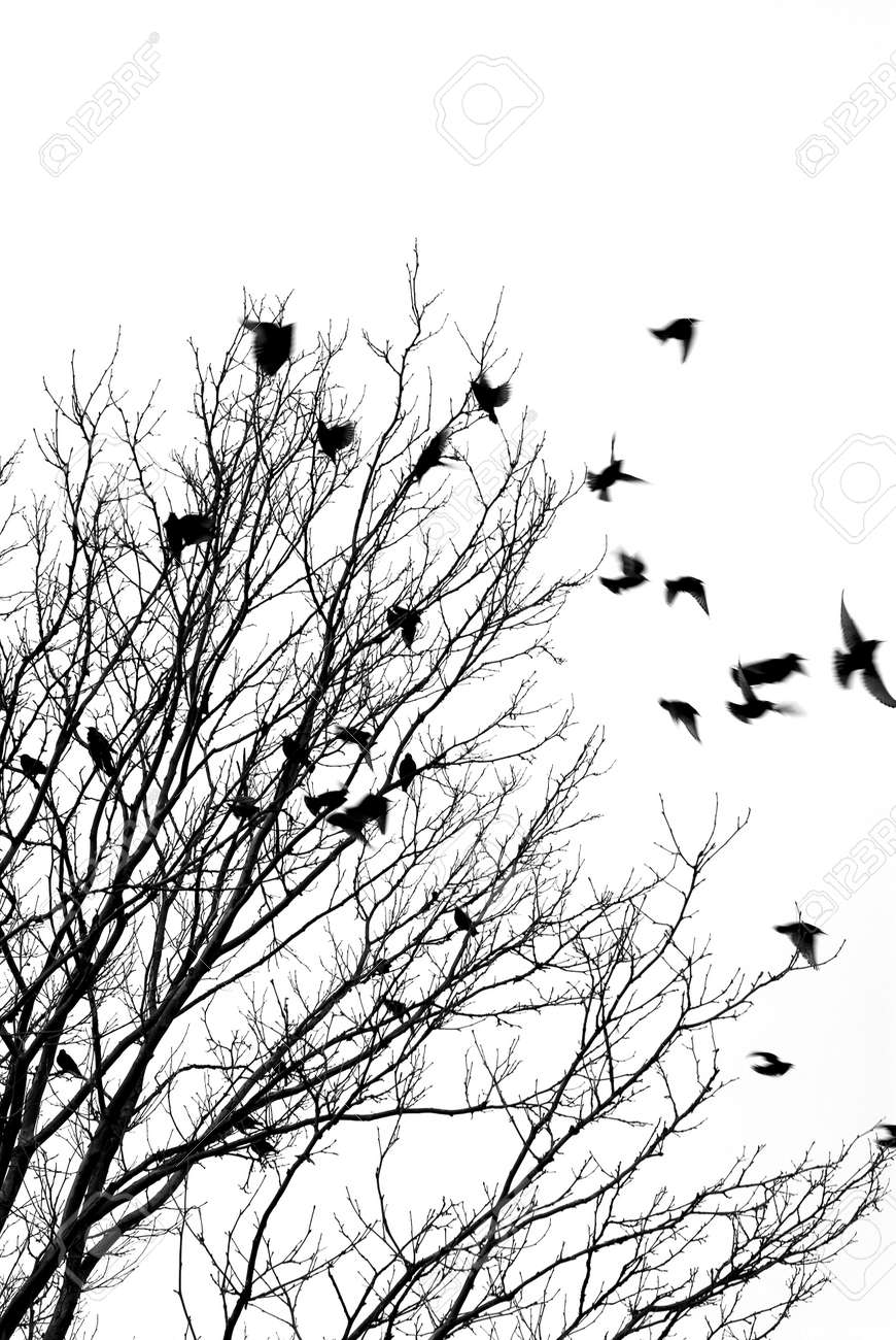 Black and white image of birds flying off a tree Stock Photo - 353230