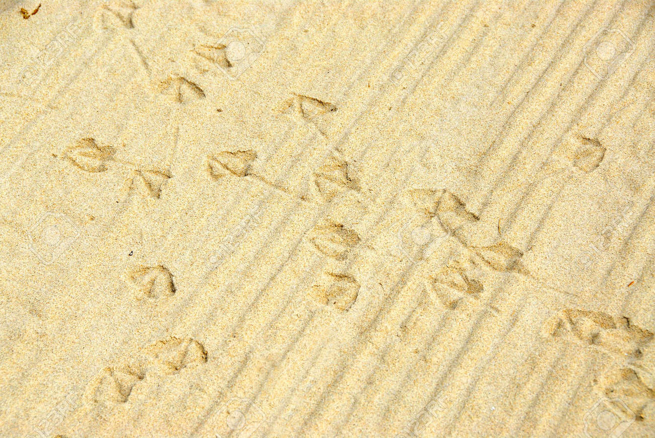 Abstract background of sand with seagull fooprints Stock Photo - 475553