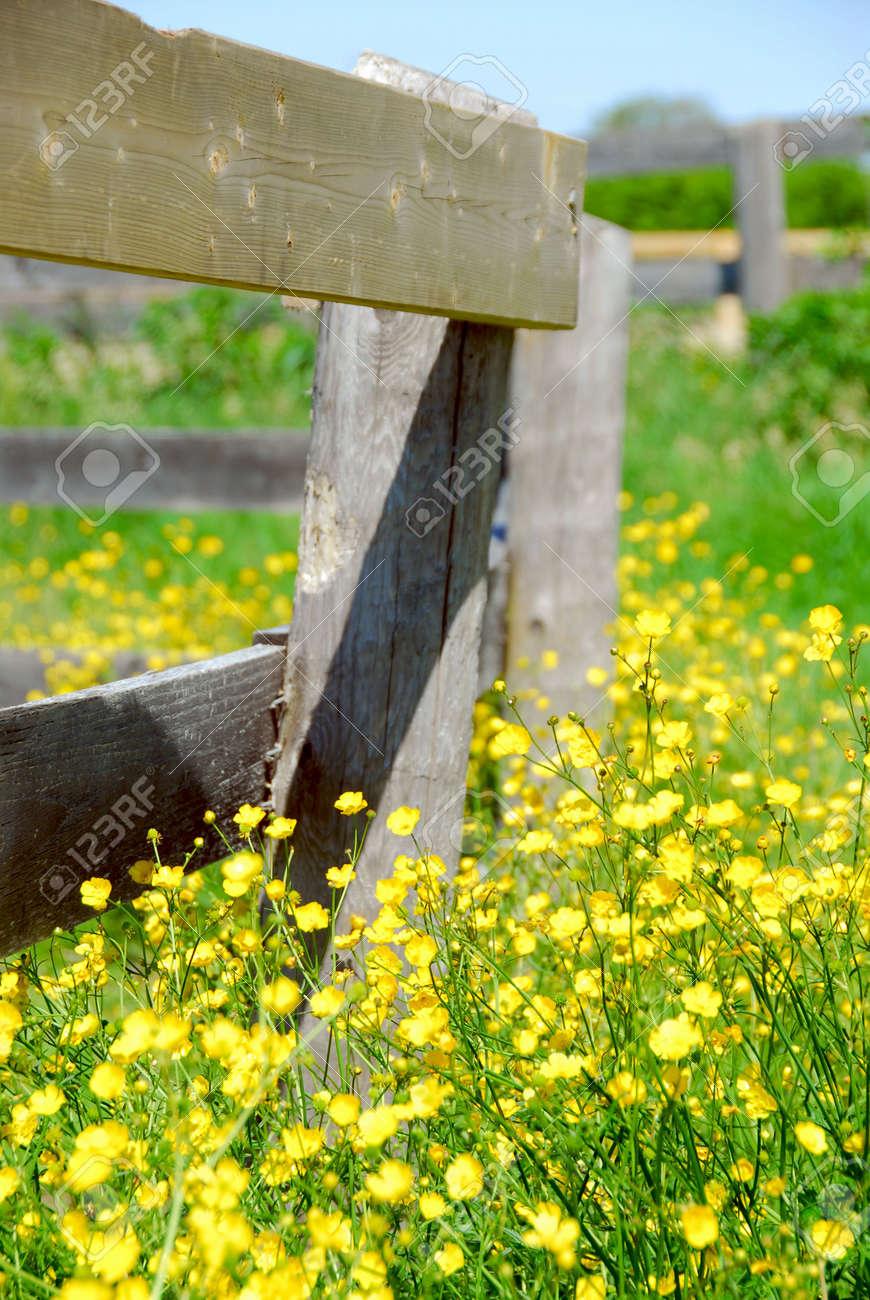 Yellow buttercups growing near farm fence in a green meadow Stock Photo - 865780