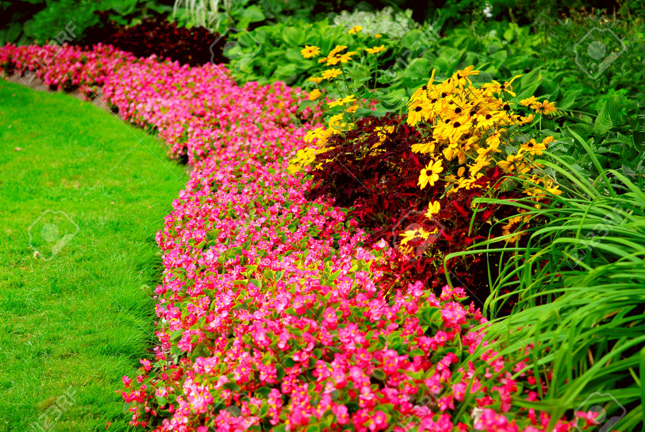 Blooming flowers in late summer garden flowerbeds Stock Photo - 1526438