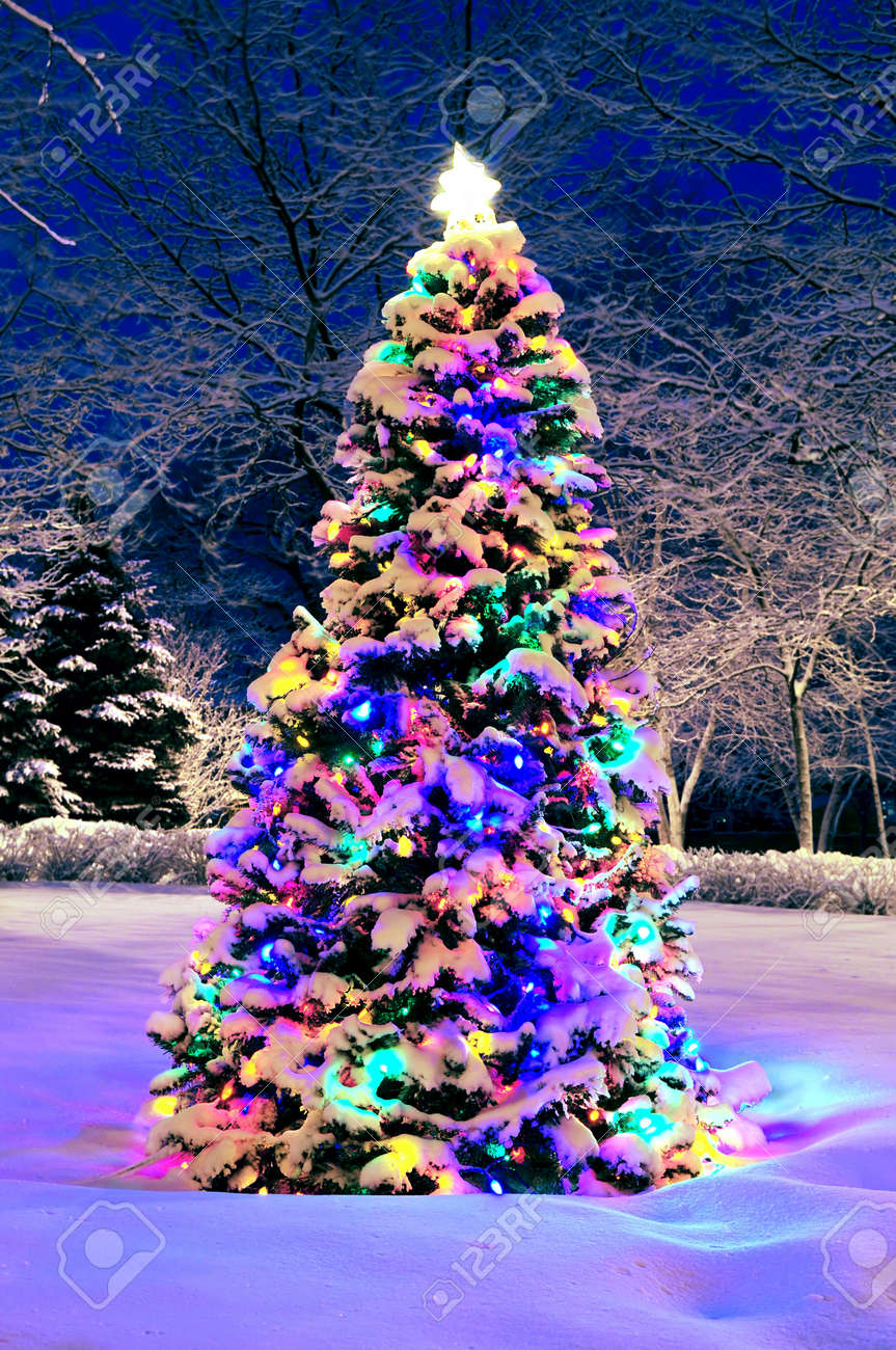 decorated christmas tree outside with lights covered with snow stock photo 2368515 - Christmas Tree With Lights