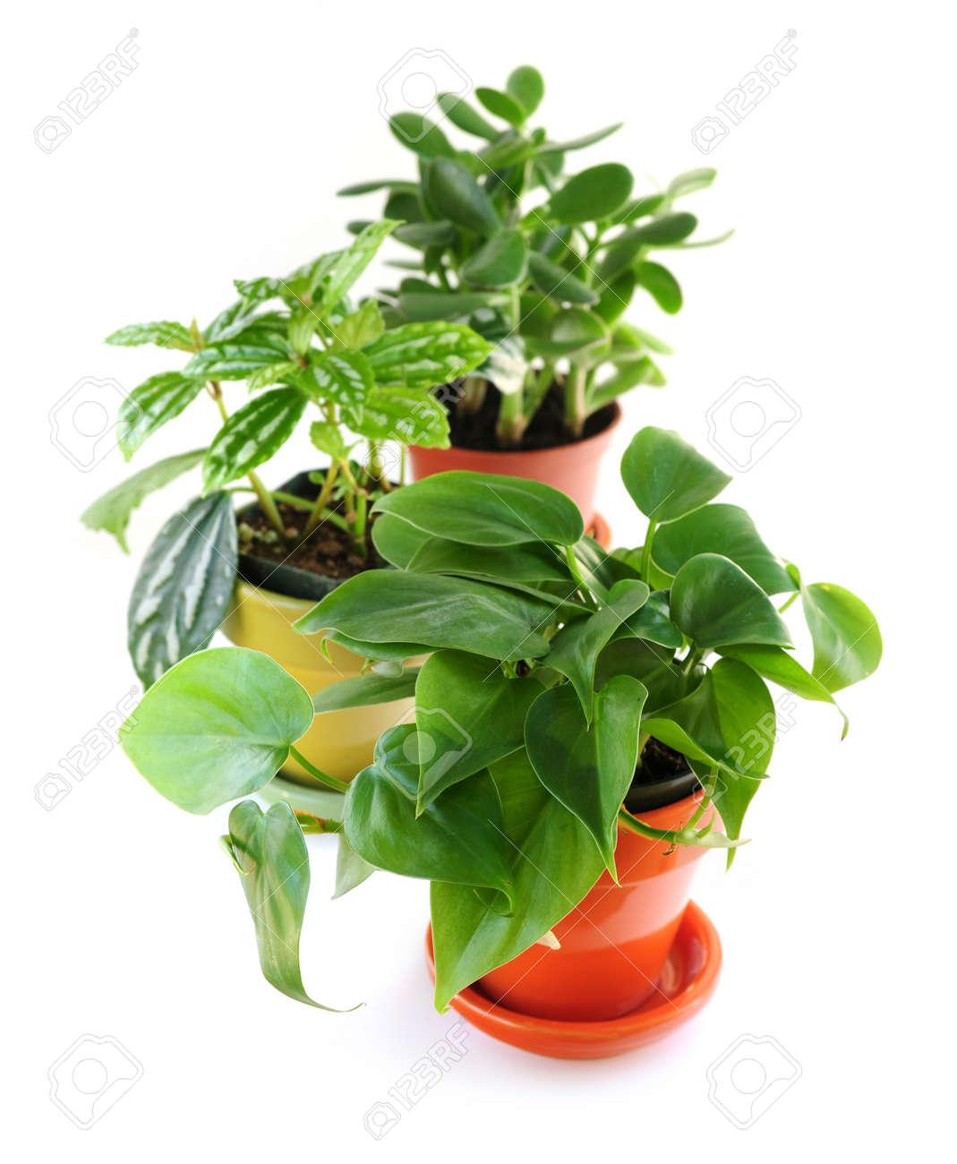 Assorted Grune Zimmerpflanzen In Topfen Vereinzelt Auf Weissem Hintergrund
