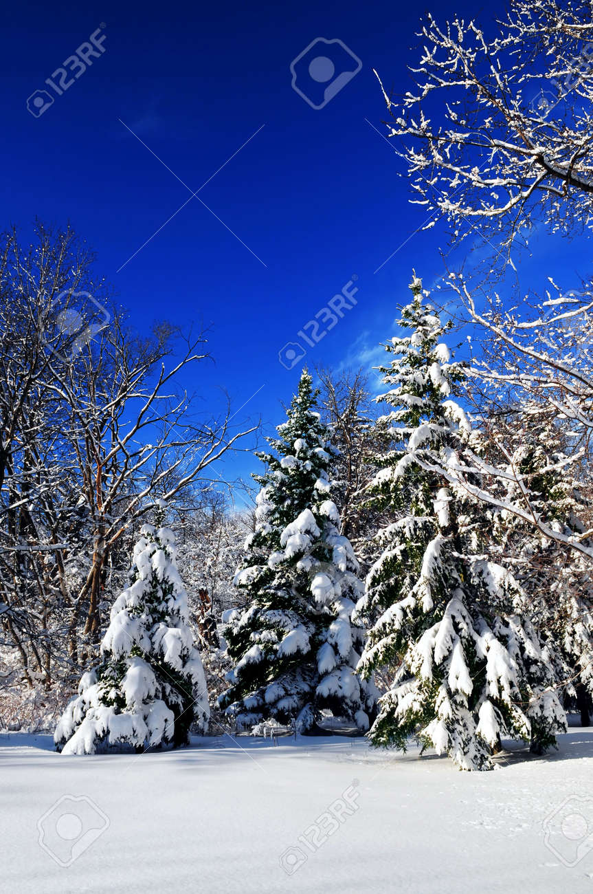 Winter landscape of a sunny forest after a heavy snowfall Stock Photo - 2567837