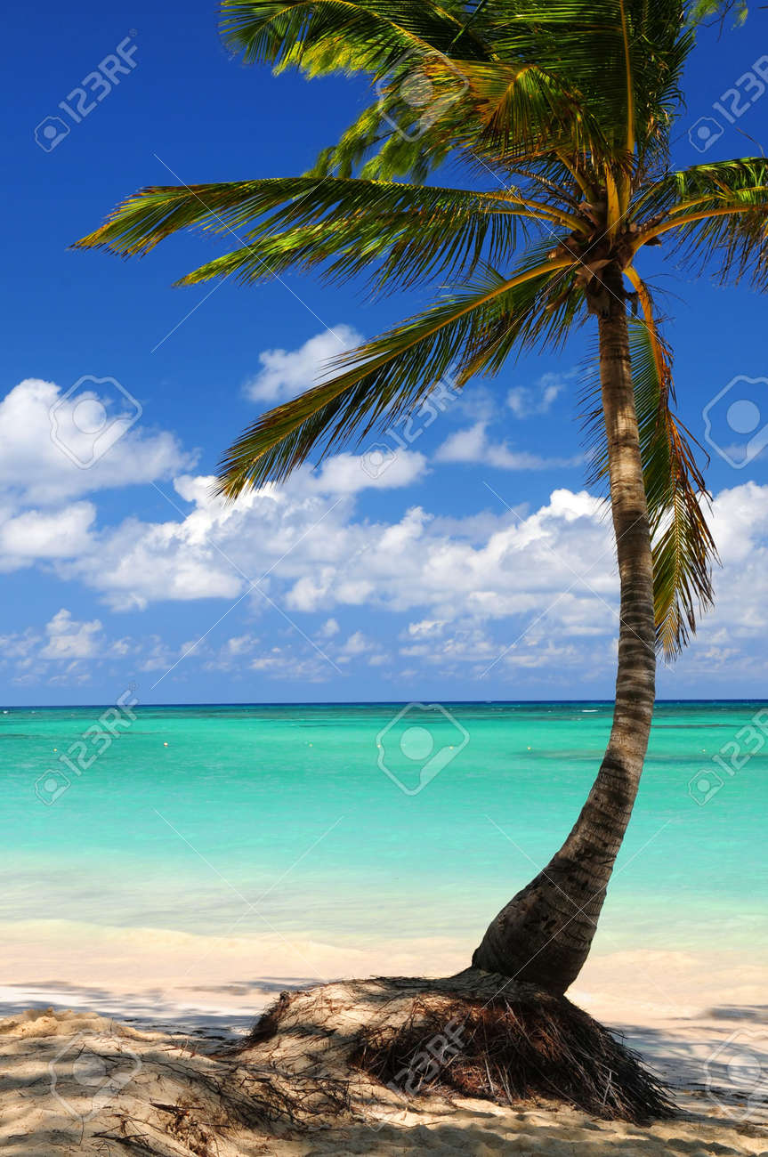 Sandy beach of a tropical island with palm tree Stock Photo - 2853184