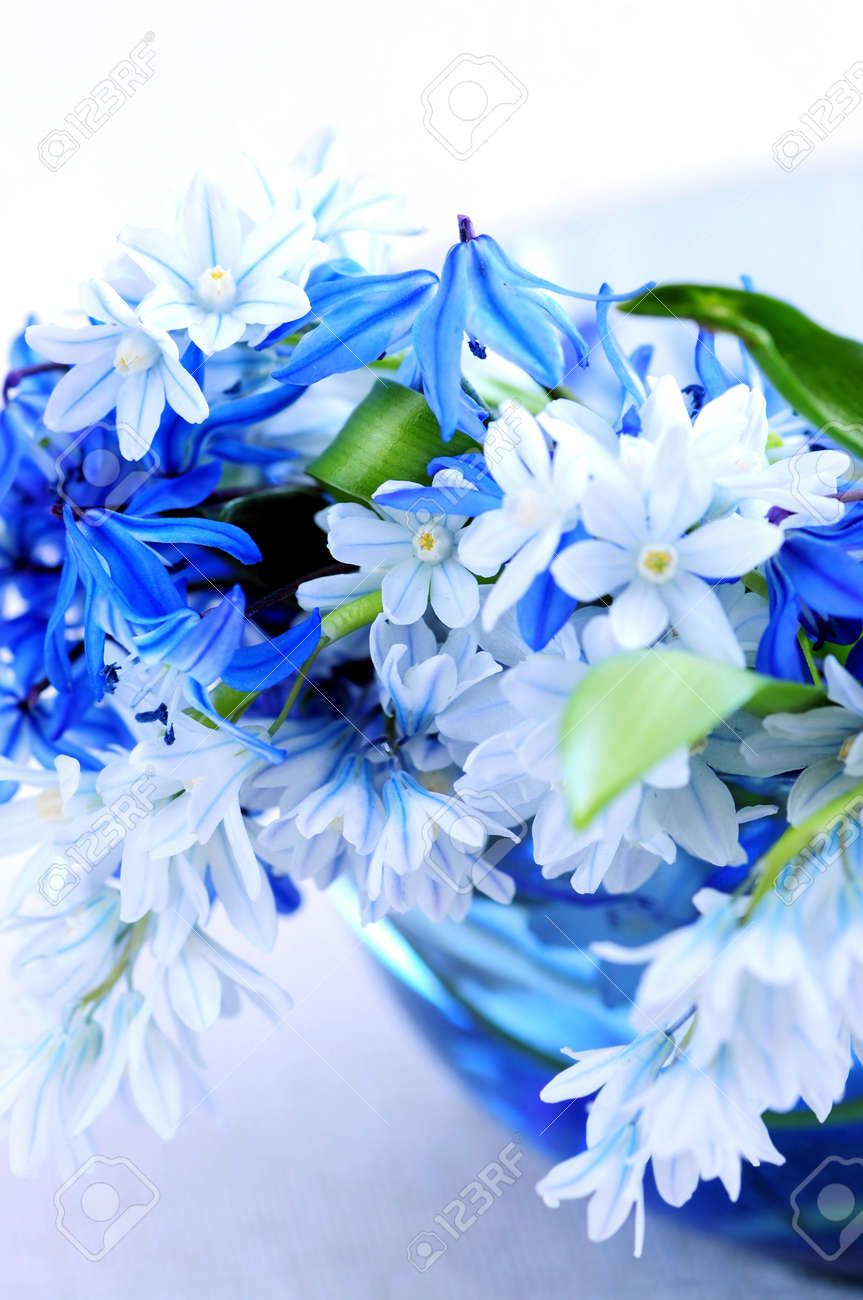 Blue Bouquet Of First Spring Flowers Closeup Stock Photo, Picture ...