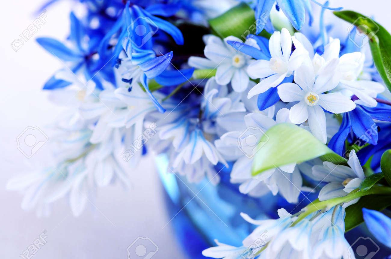 Blue bouquet of first spring flowers closeup stock photo picture blue bouquet of first spring flowers closeup stock photo 3010108 mightylinksfo Choice Image