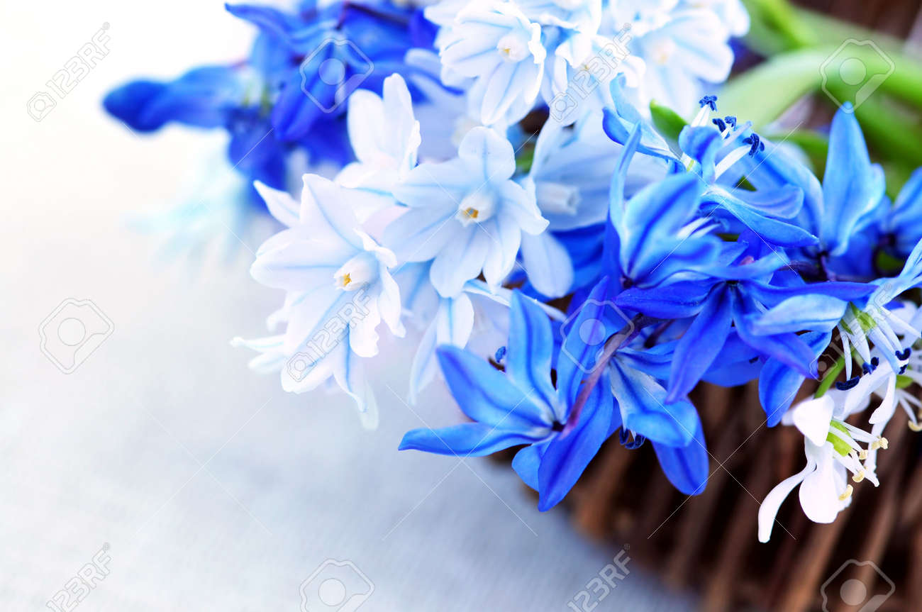Blue bouquet of first spring flowers in a basket closeup stock blue bouquet of first spring flowers in a basket closeup stock photo 3069535 dhlflorist Choice Image