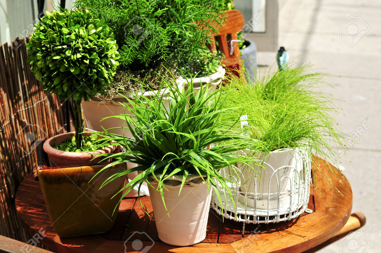 ... Garden Design With Potted Green Plants On Wooden Patio Table Stock  Photo, Picture And With