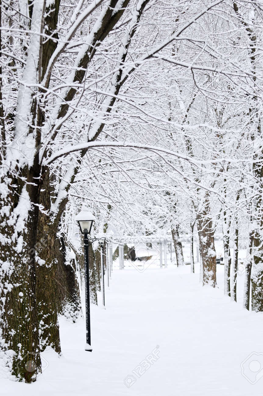 Lane in winter park with snow covered trees Stock Photo - 3564713