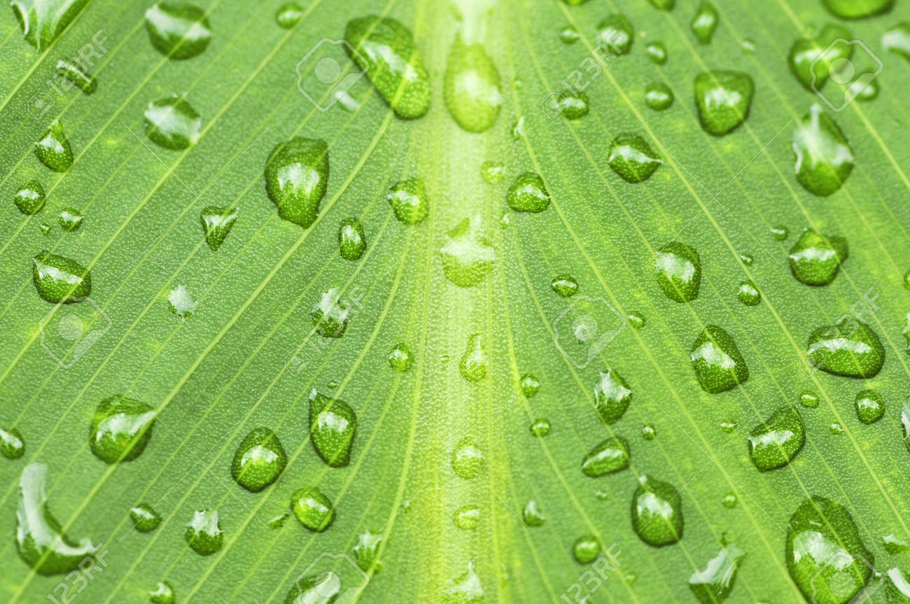 Natural background of green plant leaf with raindrops Stock Photo - 3571954