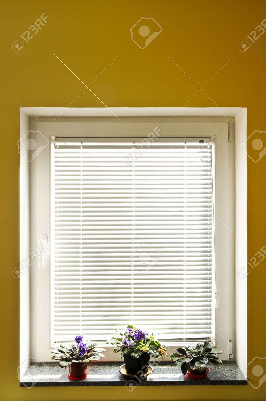 Horizontal blinds on window with three houseplants Stock Photo - 5437201