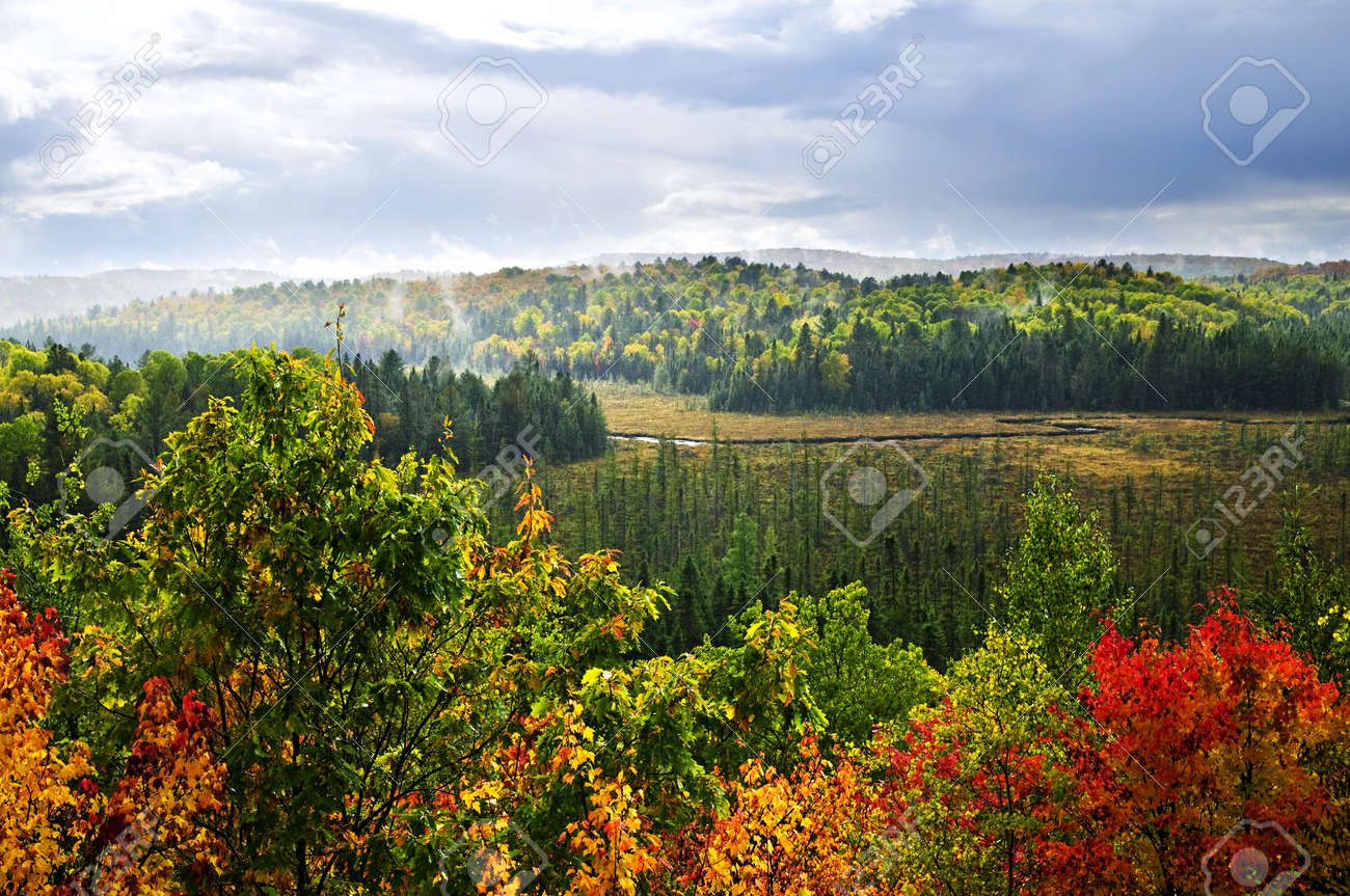 High View Of Fall Forest With Colorful Trees In Rain Storm Stock ...