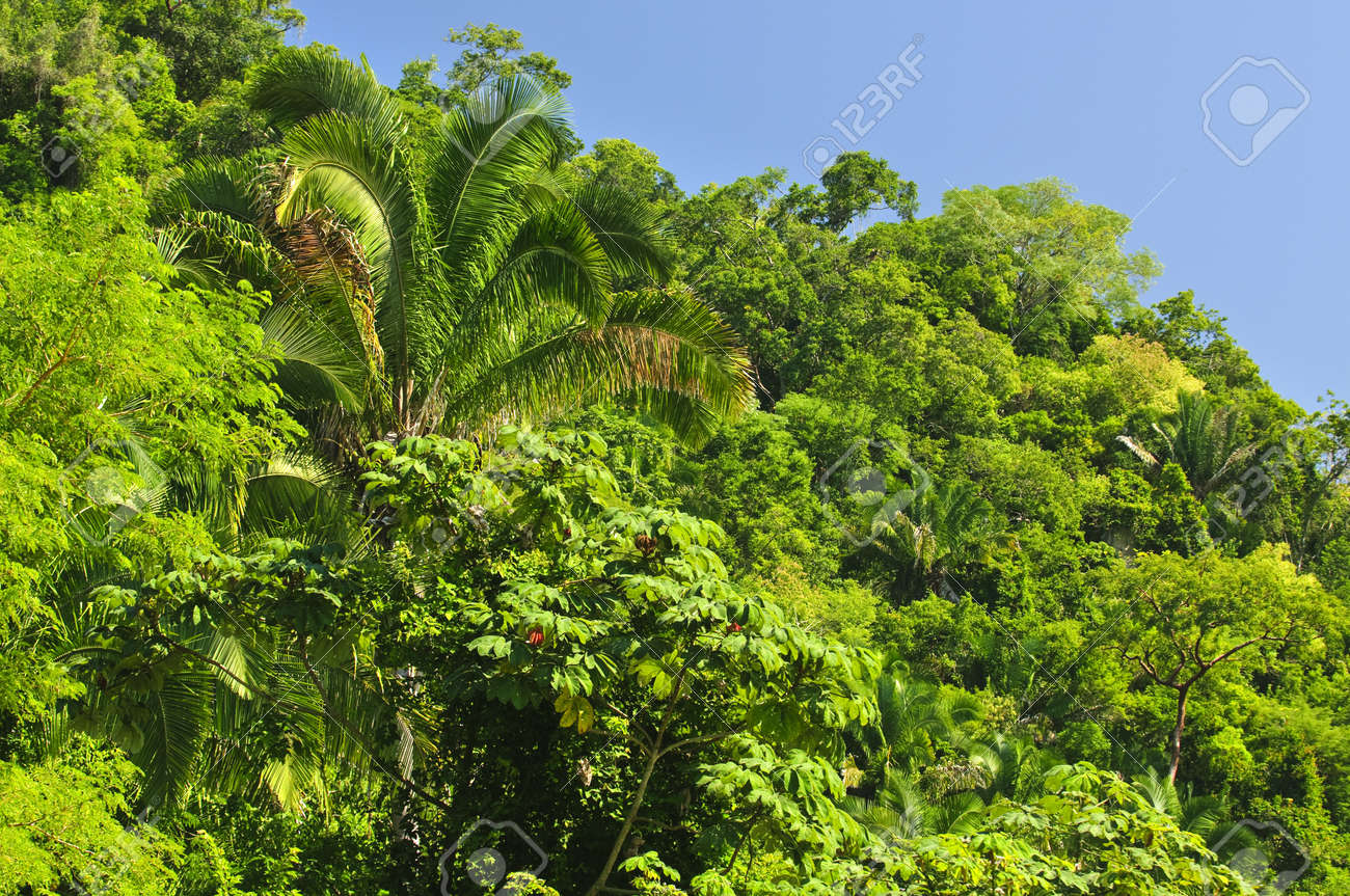 Background of lush tropical jungle at Pacific coast of Mexico Stock Photo - 7166448