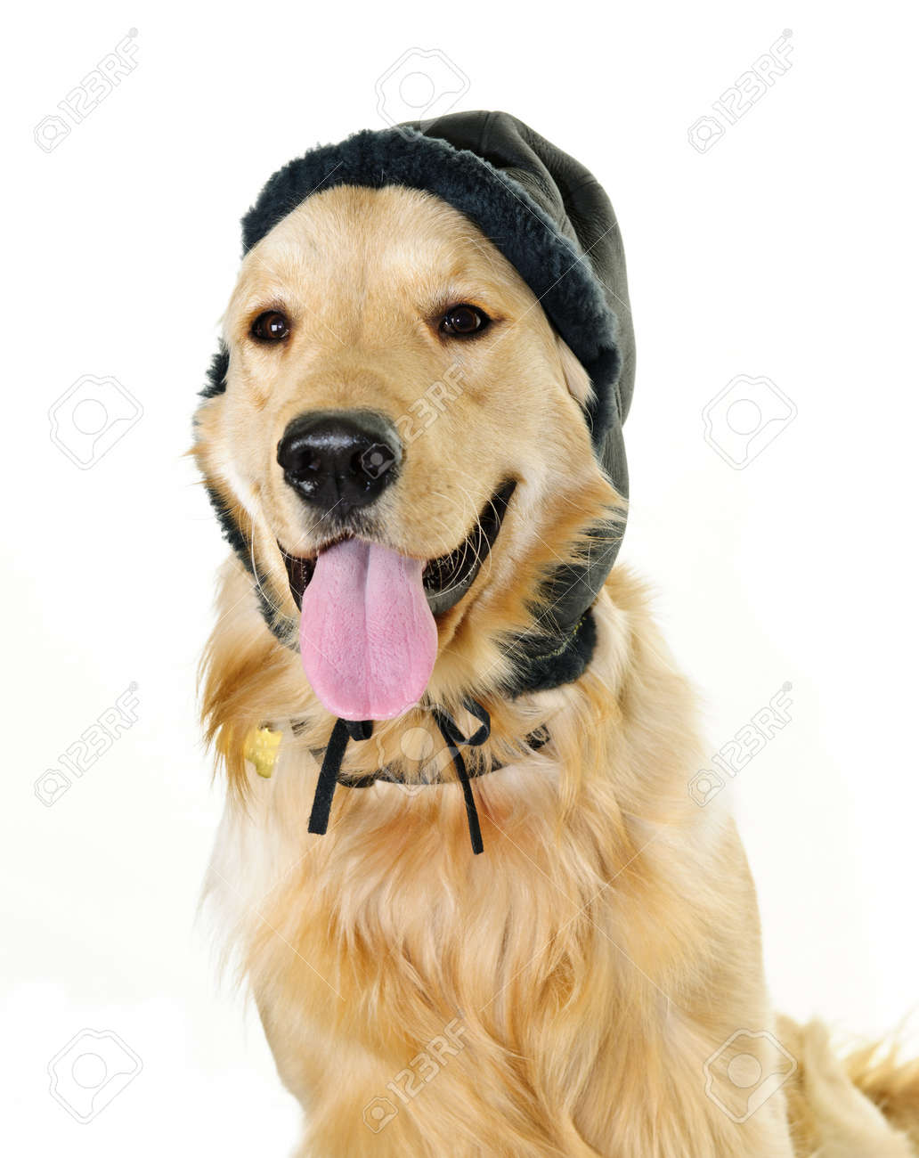 Funny golden retriever dog wearing winter hat  isolated on white background Stock Photo - 9304051