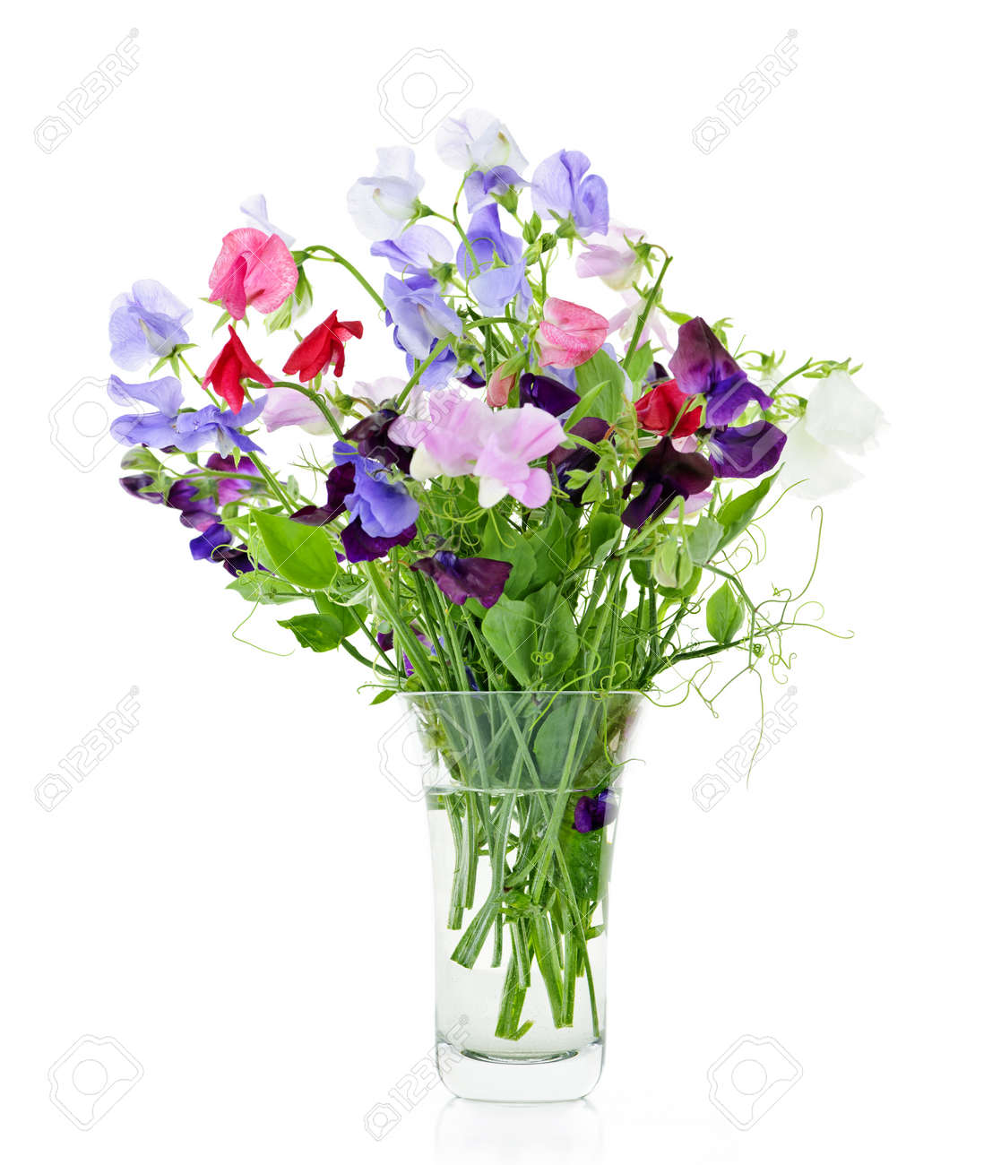 Bouquet of colorful sweet pea flowers in glass vase stock photo bouquet of colorful sweet pea flowers in glass vase stock photo 10500872 reviewsmspy