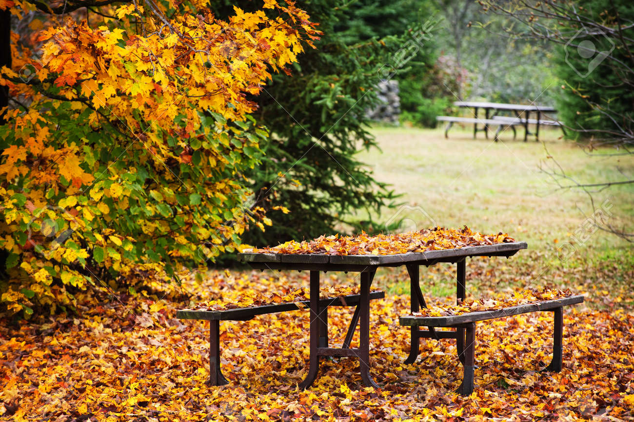 Picnic table covered with colorful fall leaves, Algonquin Park, Canada. Stock Photo - 10943428
