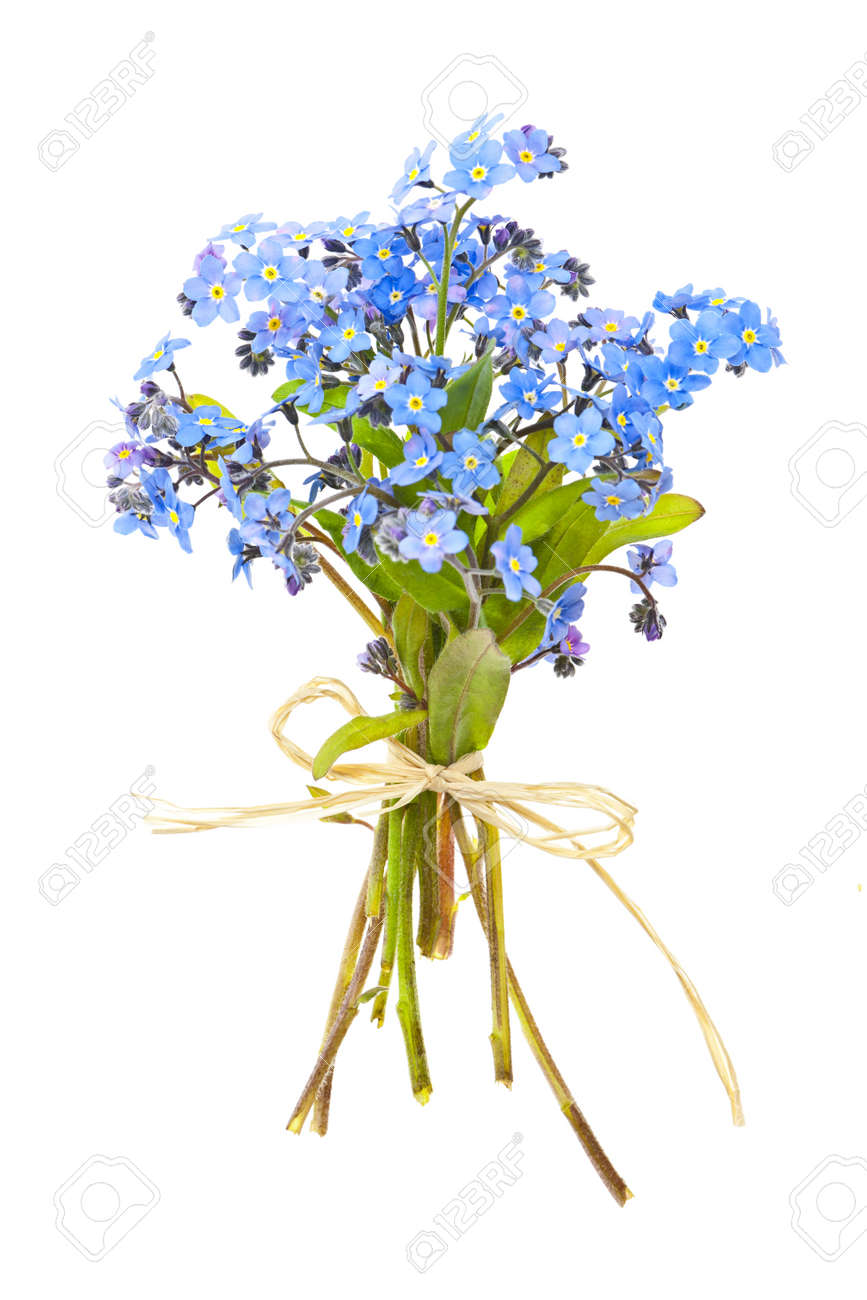 Bouquet Of Blue Wild Forget Me Not Flowers Tied With Bow Isolated On