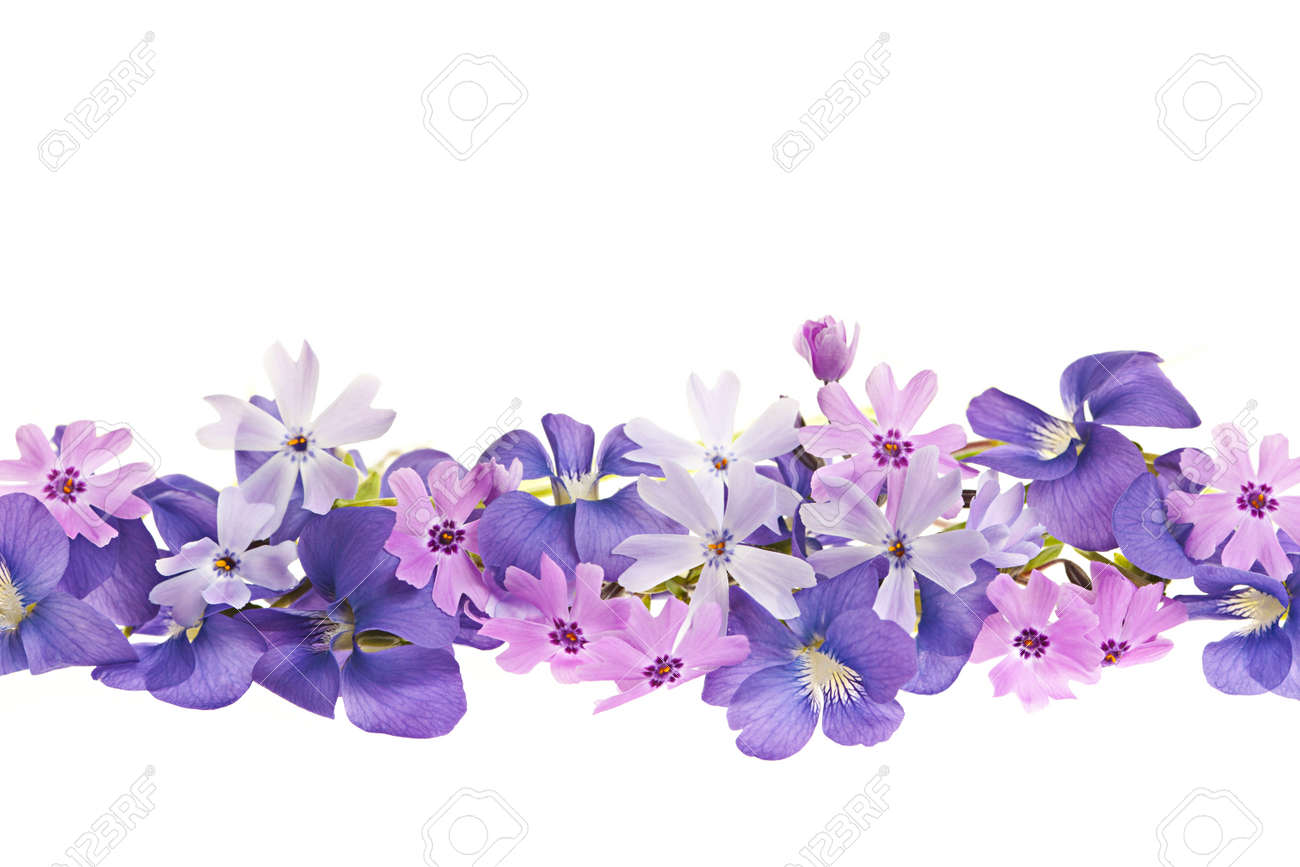 Arrangement Of Purple Violets And Moss Pink Flowers Isolated Stock