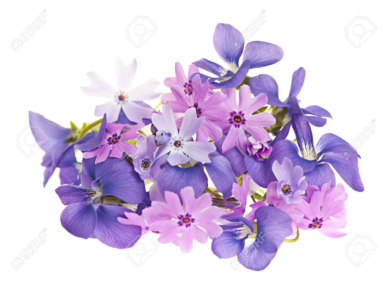 Purple Flowers White Background Lektonfo