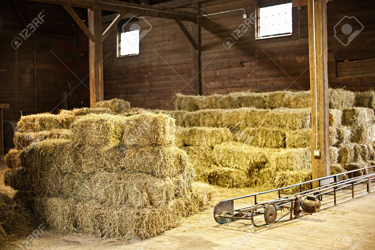 Interior Of Barn With Hay Bales Stacks And Conveyor Belt Stock Photo