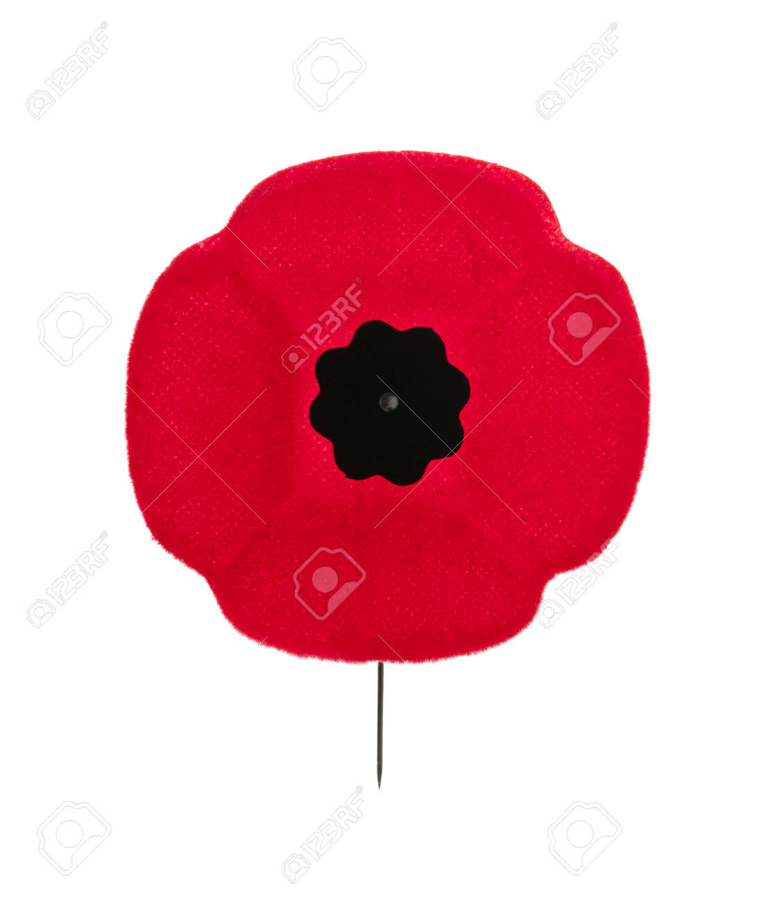remembrance day poppy canada stock photos royalty free