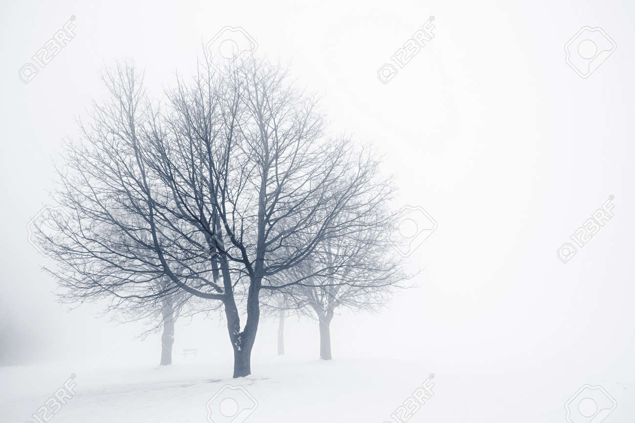Winter scene of leafless trees in fog with copy space Stock Photo - 17664255