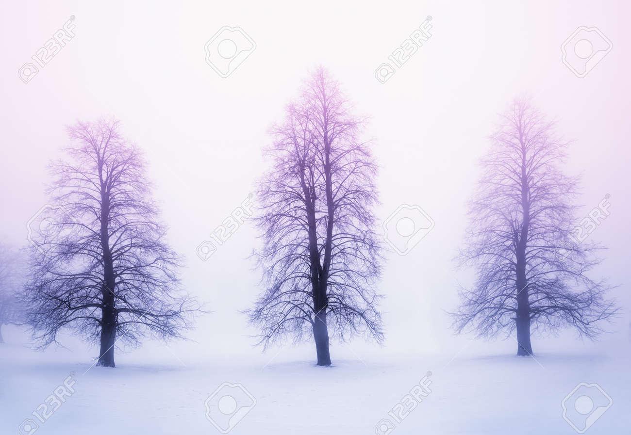 Foggy winter sunrise scene with three leafless trees Stock Photo - 18654206