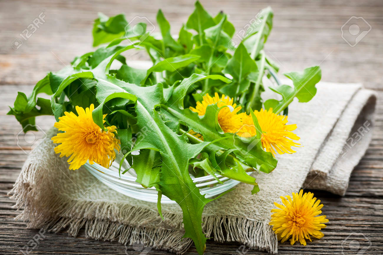 Foraged edible dandelion flowers and greens in bowl Stock Photo - 25240898