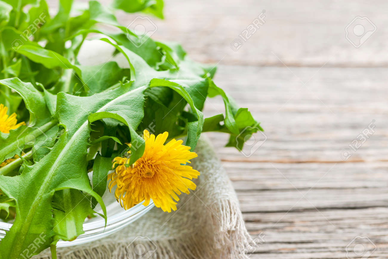 Foraged edible dandelion flowers and greens in bowl on rustic wood background with copy space Stock Photo - 25240900