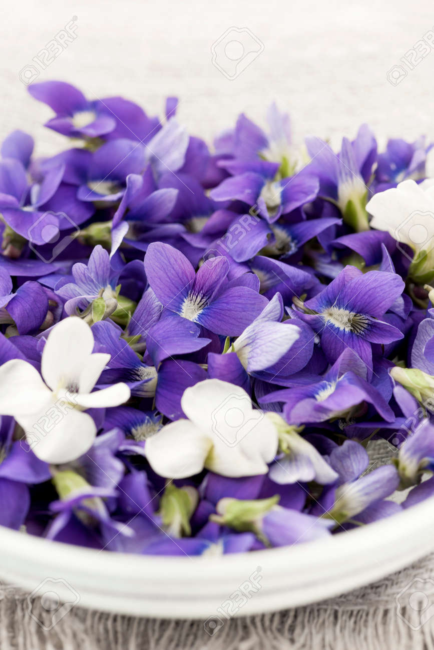 Foraged edible purple and white violet flowers in bowl closeup stock foraged edible purple and white violet flowers in bowl closeup stock photo 25240946 mightylinksfo