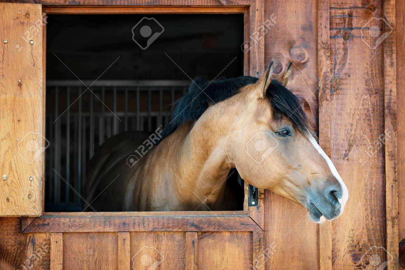 Curious brown horse looking out stable window Stock Photo - 26501525