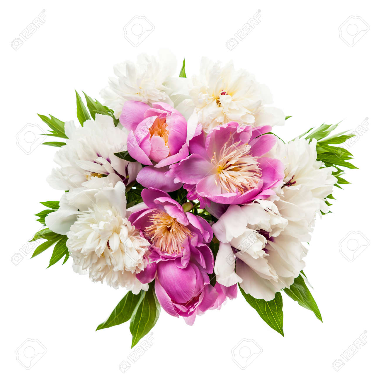 Bouquet of fresh peony flowers isolated on white background Stock Photo - 26501432