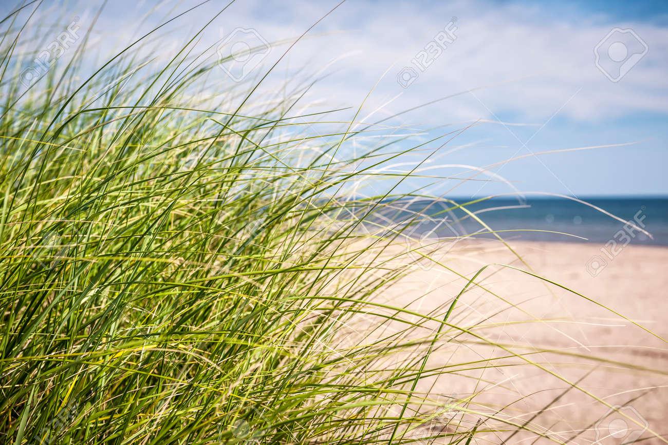 Grass growing on sandy beach at Atlantic coast of Prince Edward Island, Canada Stock Photo - 27340250