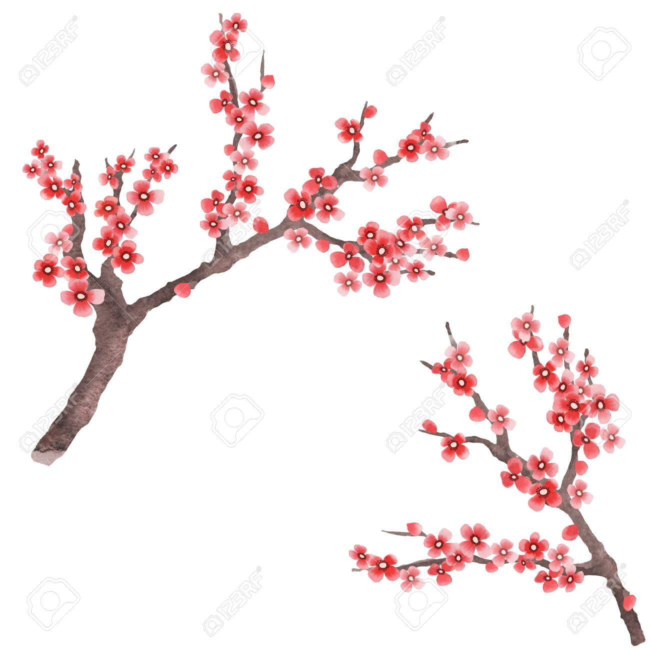 Sakura Branches As Design Element Spring Sakura In Hand Drawn Stock Photo Picture And Royalty Free Image Image 100974293