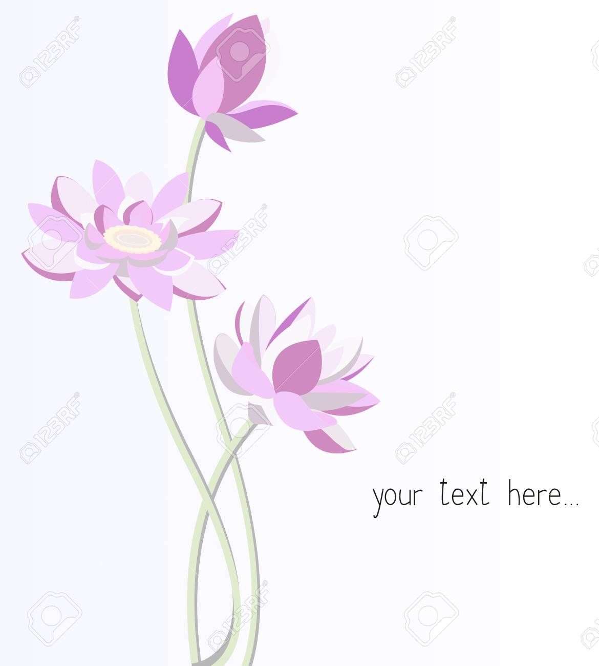 Lotus Flowers Graphic Modern Illustration Stylish Design Stock