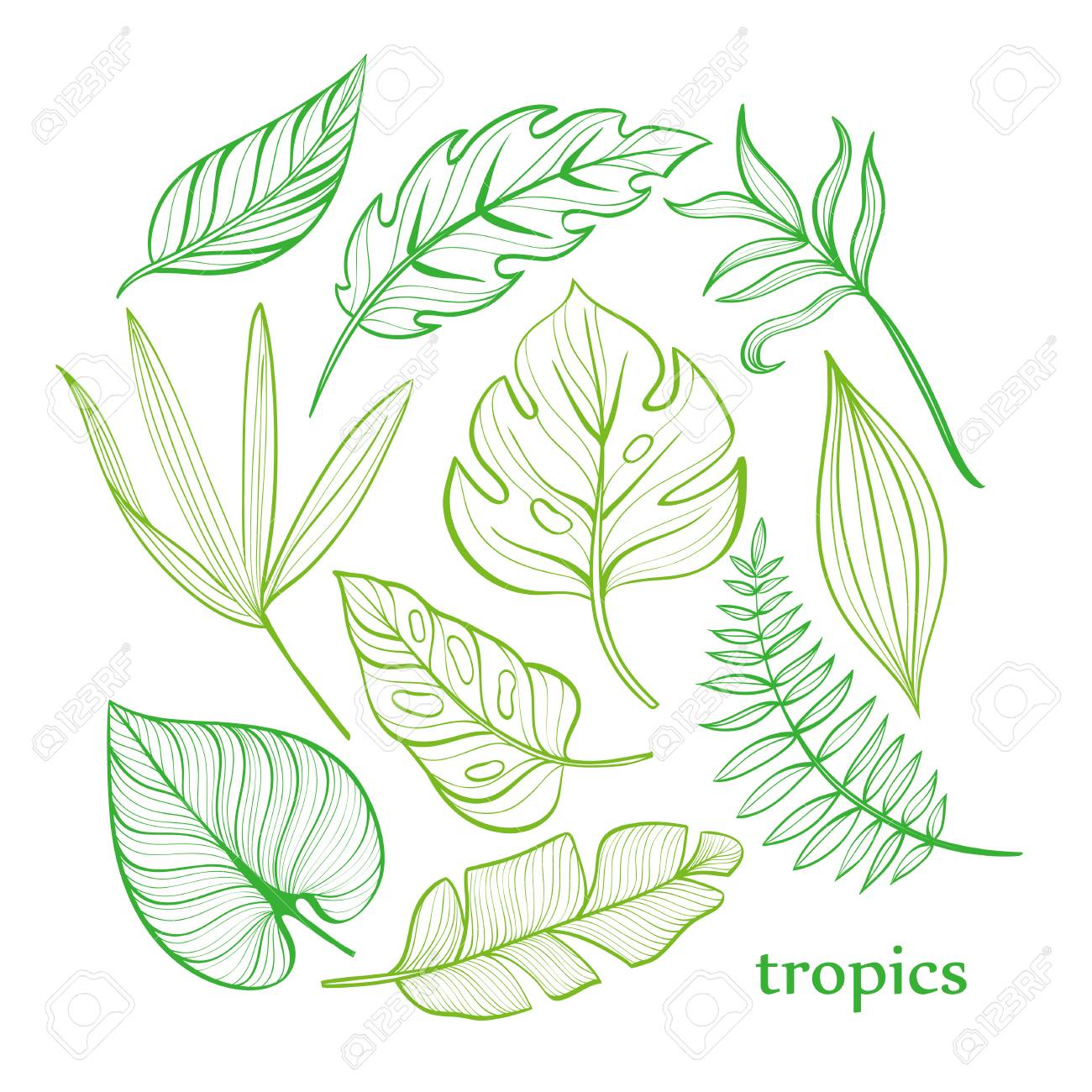 Set Of Tropical Leaves Line Drawing Hand Drawn Illustration Royalty Free Cliparts Vectors And Stock Illustration Image 126065464 Most relevant best selling latest uploads. set of tropical leaves line drawing hand drawn illustration