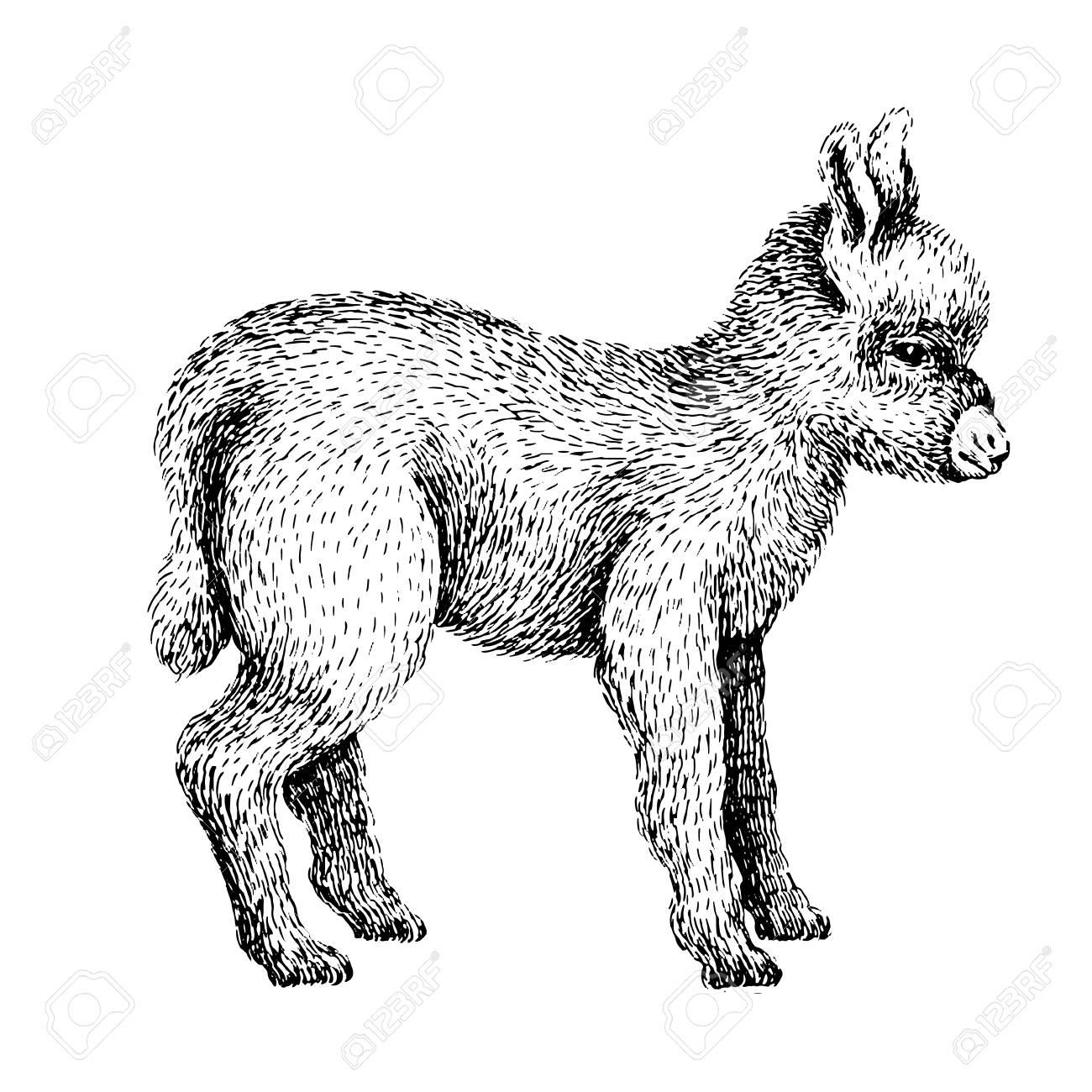 Baby Farm Animal Domestic Little Cute Donkey Vintage Style Vector Illustration