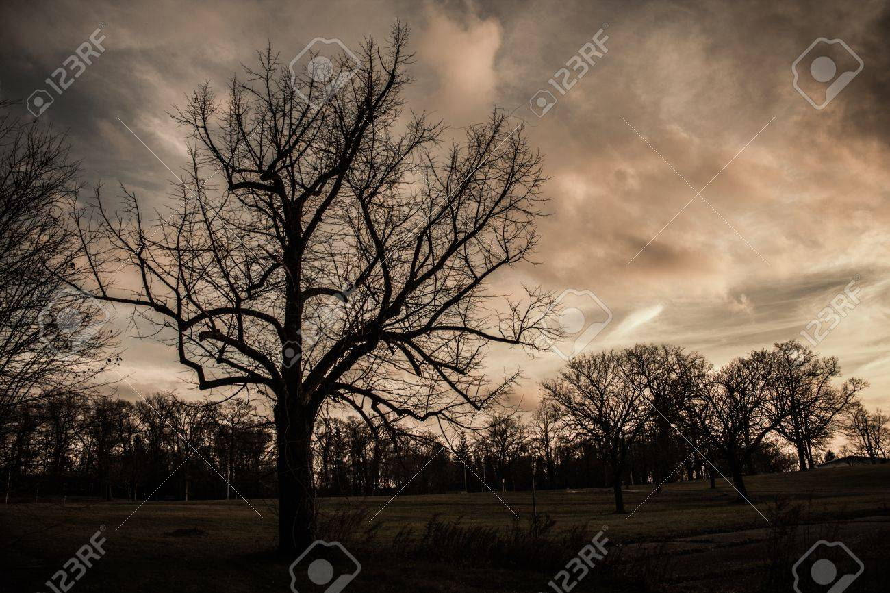 Scary Spooky tree background - 20882388