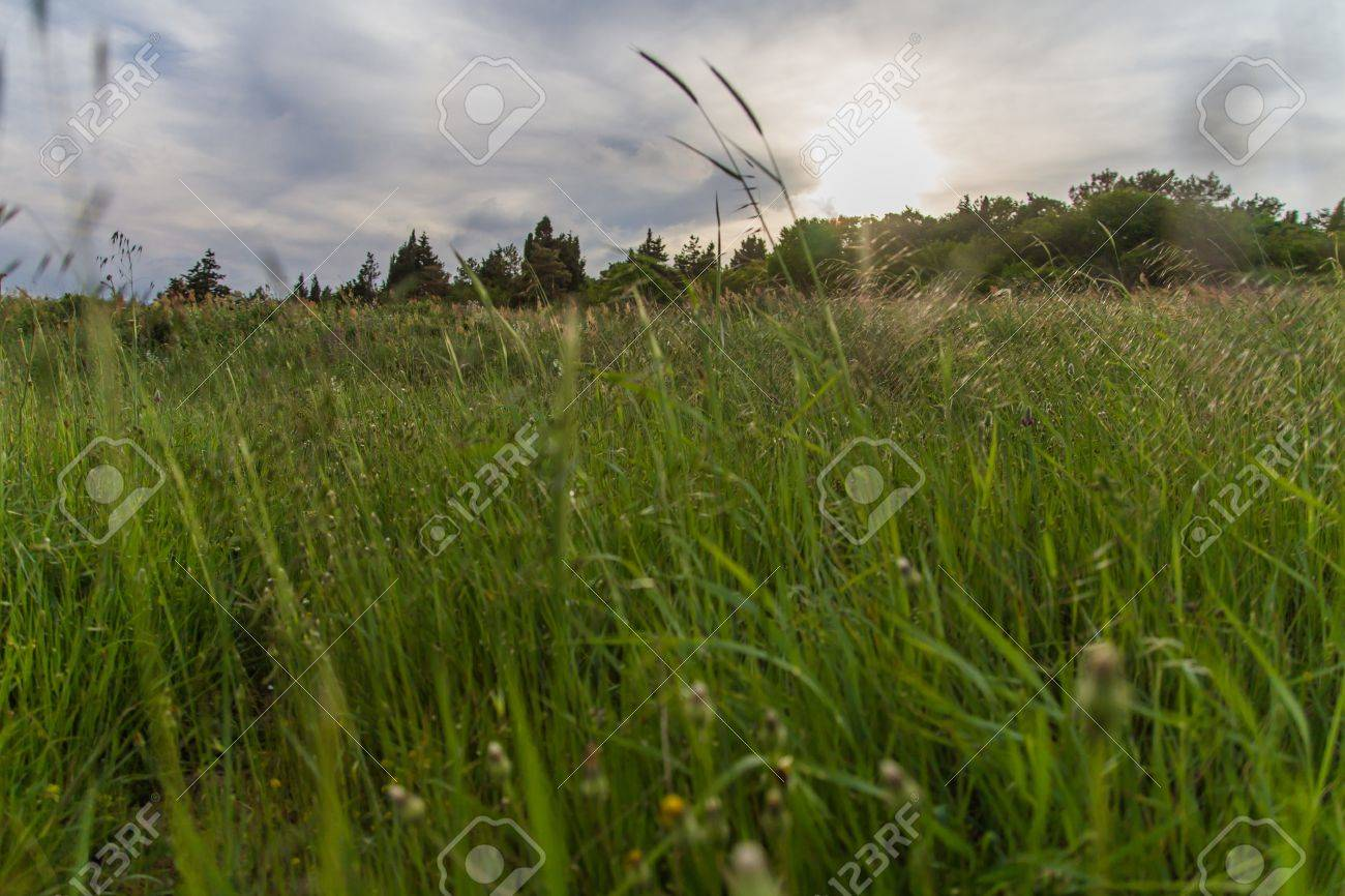 Sunset on the green field with grass and trees - 20882600